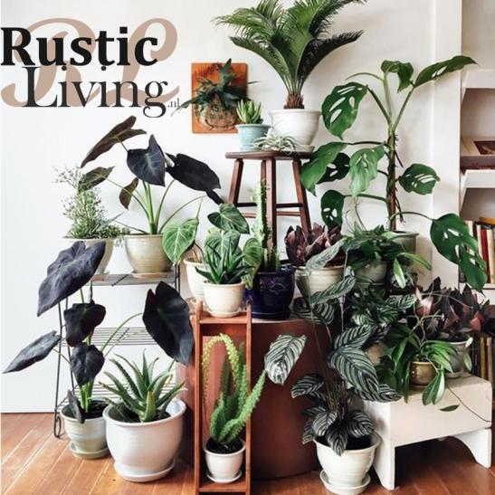 Planten.jpg