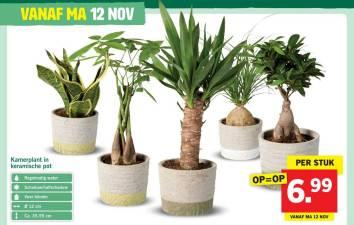 kamerplant-in-keramische-pot