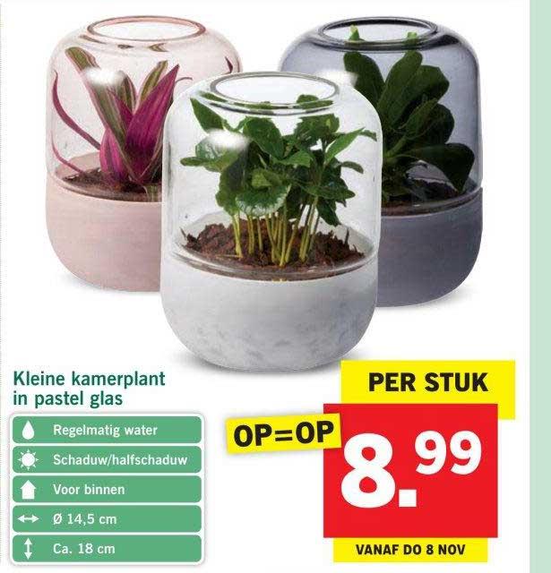 kleine-kamerplant-in-pastel-glas